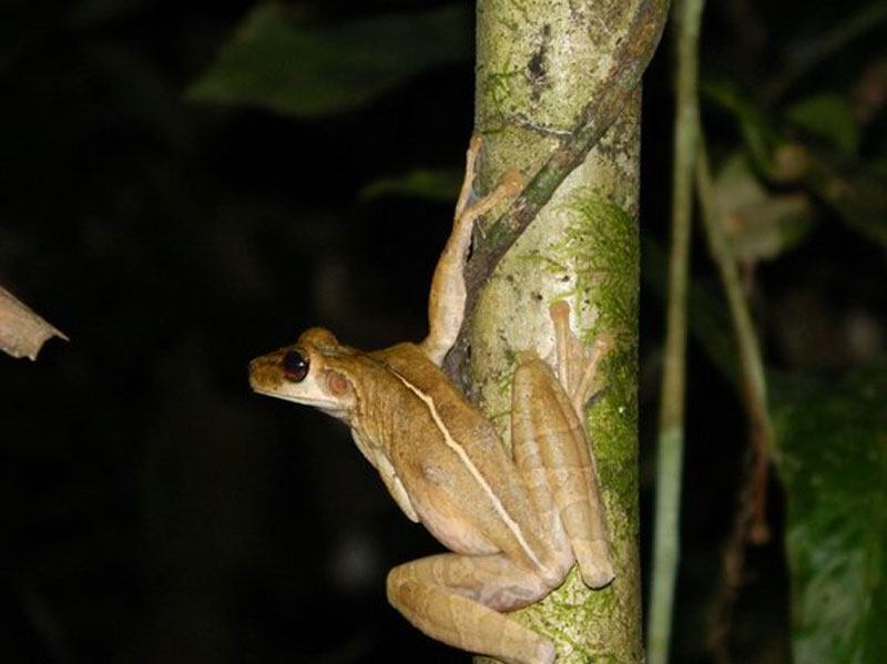 MADIDI: La Cultura de la Selva