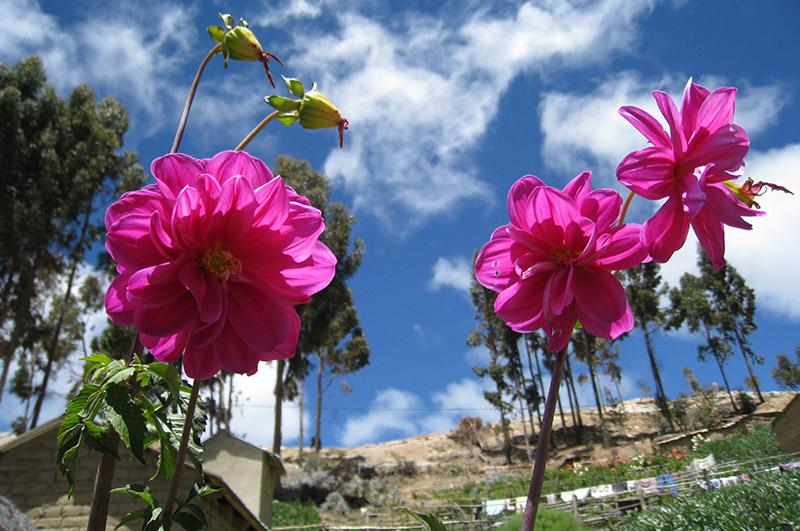 Flora de la Isla del Sol